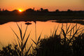 Sunset over tidal lagoon with silhouettes, Hammonasset Beach, Ma Royalty Free Stock Photo