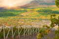 Sunset over a vineyard Royalty Free Stock Photos