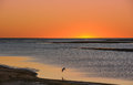 Sunset over wetlands with waterbird flying sun setting calm beach a single Stock Photo