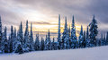 Sunset over a Winter Landscape with Snow Covered Trees on the Ski Hills near the village of Sun Peaks Royalty Free Stock Photo