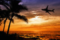 Sunset with palm tree and airplane silhouettes Royalty Free Stock Photo