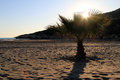 Sunset and palm tree on the beach patara turkey Stock Photos
