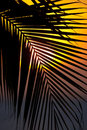 Sunset through a palm tree frond Royalty Free Stock Photo