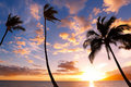 Sunset Palm Trees Royalty Free Stock Photo