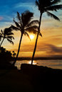 Sunset Palm Trees on Maui Hawaii Royalty Free Stock Photo