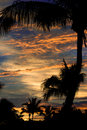 Sunset through the palms fiji coconut palm trees frame a dramatic at denarau island Stock Image