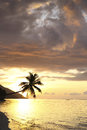 Sunset on paradise island beach coconut palm tropical at in raja ampat west papua Stock Image