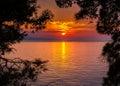 Sunset through pine trees Royalty Free Stock Photo