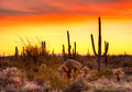 Sunset red sky over sonoran desert at Stock Images