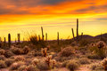 Sunset red sky over sonoran desert at Stock Photography