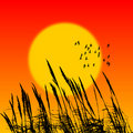 Sunset reed Royalty Free Stock Photo