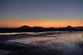 Sunset of reeds field in suncheon bay korea Royalty Free Stock Images