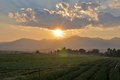 Sunset by the rice-fields and mountain Stock Photography