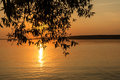 Sunset river willow branch Royalty Free Stock Photo