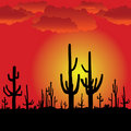 Sunset with Saguaro Cactus. Vector background. Stock Photography