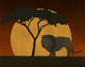 Sunset scene at african safari with lion illustration of Stock Images