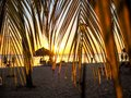 Sunset scene framed by palm leaves Royalty Free Stock Photo