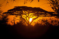 Sunset in serengeti safari tanzania africa Stock Photography