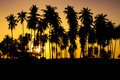 Palm trees silhouette sunset Royalty Free Stock Photo