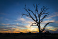 Sunset silhouette dead tree silhouetted at sturt national park outback new south wales australia Stock Image