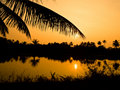 Sunset with silhouette of palm branch Royalty Free Stock Photography