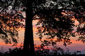 Sunset silhouette tree at golden Royalty Free Stock Photo