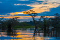 Sunset silhouetting a flooded jungle in Laguna Grande, in the Cuyabeno Wildlife Reserve, Amazon Basin, Ecuador Royalty Free Stock Photo