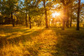 Sunset Sunrise In Atumn Forest. Natural Sunlight In Oak Woods Tr Royalty Free Stock Photo