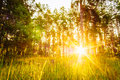 Sunset Or Sunrise In Forest Landscape. Sun Sunshine With Natural Royalty Free Stock Photo
