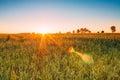 Sunset Sunrise Over Wheat Fiel...