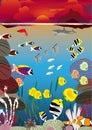 Sunset swimming fish Royalty Free Stock Photo