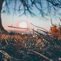 sunset swing tree big single sunrise Royalty Free Stock Photo
