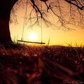 sunset swing tree big single sunrise red ast Royalty Free Stock Photo