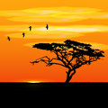 Sunset tree and birds silhouettes Royalty Free Stock Photo