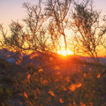 Sunset tree branch in the light of Royalty Free Stock Photo