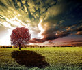 Sunset tree and green fields Royalty Free Stock Photo