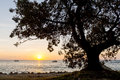 Sunset tree massive silhouetted at the coast on with boats Royalty Free Stock Photo
