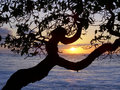 Sunset through the trees over the ocean Royalty Free Stock Photo