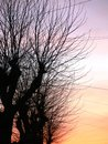 Sunset trees over the tree lined telephone avenue Royalty Free Stock Photo