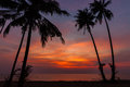 Sunset on tropical beach scenery landscape top view paradise lagoon island koh chang with green palm forest tree background Royalty Free Stock Photography