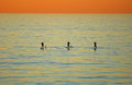 Sunset view of three paddle boarders off heisler p winter park laguna each california boarding a fast growing sport that has Royalty Free Stock Photos
