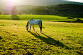 Sunset with white horse Royalty Free Stock Images