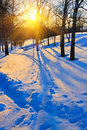 Sunset in winter forest Stock Photography