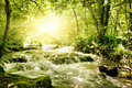 Sunshine in a forest Royalty Free Stock Images