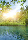 Sunshine in a forest Royalty Free Stock Photography