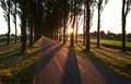 Sunshine through tree rows after sunrise Royalty Free Stock Photo