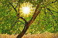 Sunshine Through The Tree Royalty Free Stock Photo
