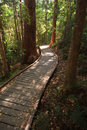 Sunshine on wooden boardwalk in the rainforest Stock Images