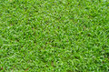 The super green grass wallpaper and background textures. Royalty Free Stock Photo