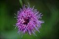Super macro photo of flower. Royalty Free Stock Photo
